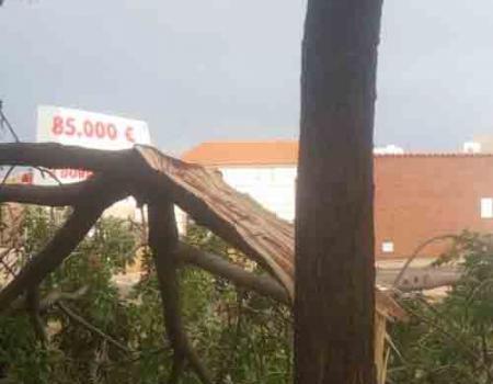 La tormenta deja varias ramas arrancadas en varios puntos de la ciudad
