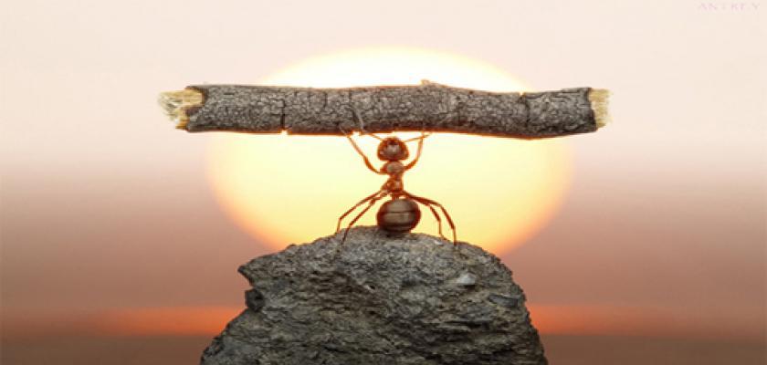 La debilidad de hoy será la fortaleza de mañana Todo lo que hoy te debilita, mañana será tu fortaleza