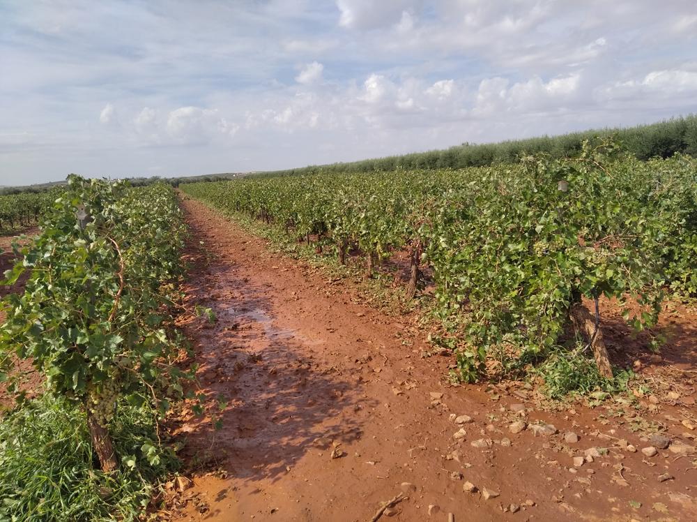 Almagro pedirá la declaración de zona catastrófica por el granizo caído durante estas dos últimas semanas